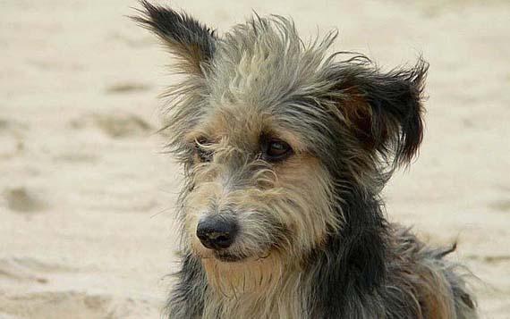 Липчанин забил молотком собак собственной матери